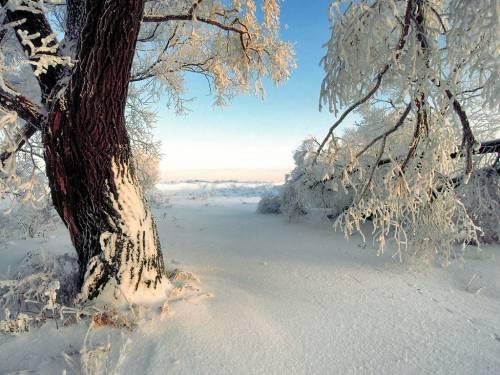 Новогодние обои зимние обои